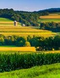 绵延山和农田晚上视图在农村约克Coun 免版税图库摄影