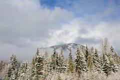山和冷杉木 免版税库存照片