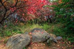山和叶子 库存照片