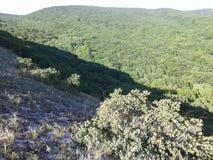 山和小山 混杂的森林和橡木森林 美好的本质 新的成人 蓝天 树 图库摄影