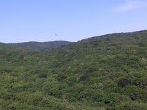 山和小山 混杂的森林和橡木森林 美好的本质 新的成人 蓝天 鸟在地面上盘旋 库存照片