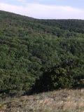 山和小山 混杂的森林和橡木森林 美好的本质 新的成人 蓝天 库存图片