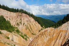 山和杉木森林 免版税库存图片