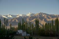 山和松树看法有雪的在上面在白天在莱赫,拉达克,印度 库存照片