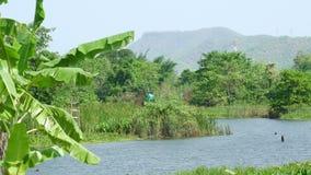 山和树看法沿河Kwai 股票录像