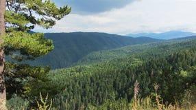山和树,路向七个Rila湖 免版税图库摄影