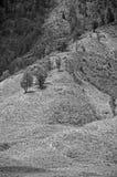 绵延山和树 库存图片