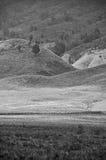 绵延山和树 免版税图库摄影