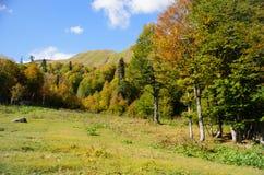 山和森林在阿布哈兹 免版税库存图片