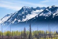山和森林雾 库存照片