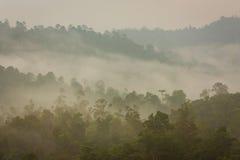 山和热带密林在薄雾下 免版税图库摄影