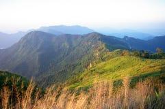 山和草在Phu池氏Fa森林公园 免版税库存照片