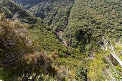 山和雨林小山美丽如画的空中全景在马德拉岛海岛上, 图库摄影