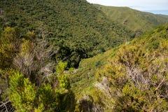 山和雨林小山美丽如画的空中全景在马德拉岛海岛上, 免版税图库摄影