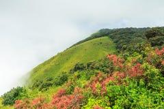 山和雾在土井inthanon在Chiangmai省,泰国 库存照片