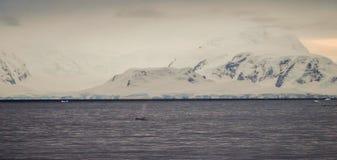 山和驼背鲸在南极洲的Foyn港口 库存图片