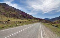 山和绵羊 免版税库存照片