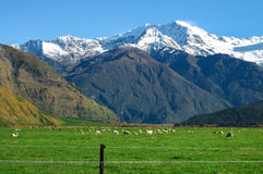 山和绵羊 免版税库存图片