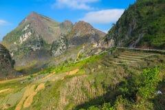 山和ricefields,河江市,北越南 库存照片