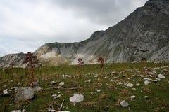 山在吉尔吉斯斯坦 免版税库存照片