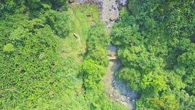山在密林天线中的河奔跑 影视素材