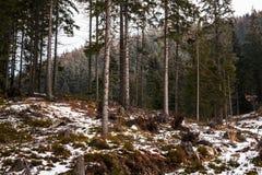 山在斯洛伐克,高Tatras 库存图片