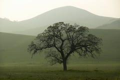 绵延山在春天在日落的在倍克斯城西部的路线58,加州 免版税图库摄影