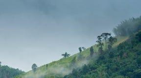 山在有雾的早晨 库存图片