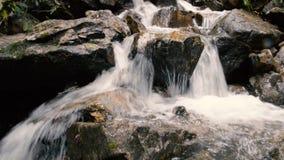山在森林美好的山森林风景的河瀑布 自然和平和沉寂 股票录像