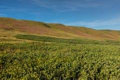 绵延山在西部高草大草原 免版税库存照片