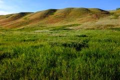 绵延山在西部高草大草原 库存图片