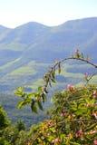 山在巴西 免版税库存图片