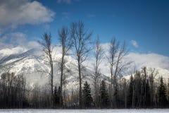 山在Fernie,不列颠哥伦比亚省 免版税库存图片
