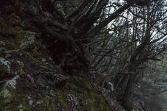 山场面黑暗的根青苔潮湿地面 库存照片