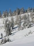 山坡冬天 库存照片
