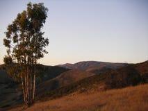 山坡孤立结构树 库存图片