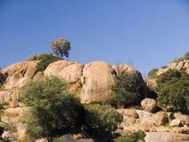 山坡岩石结构树 免版税库存照片