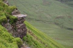 山坡岩石绵羊 库存图片