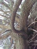 山坡树 免版税库存图片