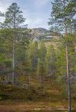 山坡的一个美丽的森林 在挪威山的秋天木风景 库存照片