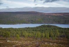 山坡的一个美丽的森林 在挪威山的秋天木风景 库存图片