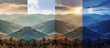 山坡的具球果森林 免版税库存图片