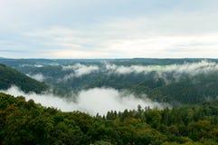 山坡的有雾的绿色森林 免版税库存照片