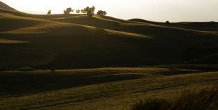 山坡的玉米田 免版税库存照片
