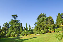 山坡的草坪在公园 免版税图库摄影