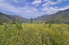 山坡的草甸 库存照片