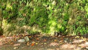 山墙壁与湿植被的在晴朗的秋天天 股票视频