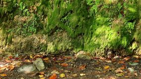 山墙壁与湿植被的在晴朗的秋天天 股票录像