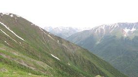 山夏天风景视图 草和山花的领域 阿尔泰山土坎风景 股票视频