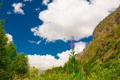 山夏天 晴朗的日 绿色森林和草甸 免版税库存图片